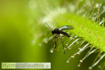 fourmis et insectes poster un message. Black Bedroom Furniture Sets. Home Design Ideas